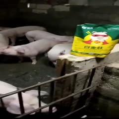 上海市闵行区预混料 猪育肥最好的方法日长3斤拉大骨架预防拉稀提前20天出栏