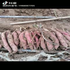 陜西省渭南市合陽縣黃心紅薯 自產自銷,量大從優