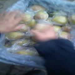 河北省沧州市肃宁县 红香酥梨脆甜