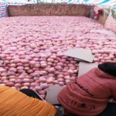 山西省運城市萬榮縣 75以上的片紅和條紅紙+膜蘋果,秦觀蘋果有地面貨和果庫貨