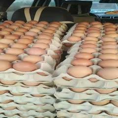 山西省晉中市平遙縣紅皮雞蛋 混裝紅皮普貨!