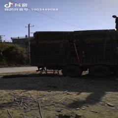 江西省九江市武寧縣 2米綠化竿,可定制各種規格竹竿。
