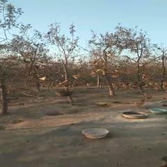 山西省運城市新絳縣 北山下蘋果園養的綠殼土雞蛋養營全面是大眾的必需品,。