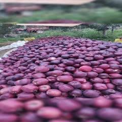 甘肅省隴南市禮縣 甘肅高原花牛蘋果,75起步,現貨供應,需要蘋果的請聯系。