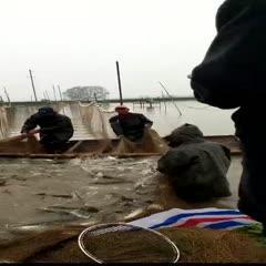 湖南省常德市漢壽縣池塘草魚 人工養殖 1-2.5公斤