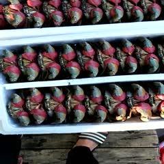 广西壮族自治区防城港市港口区 青蟹,膏蟹大小都有