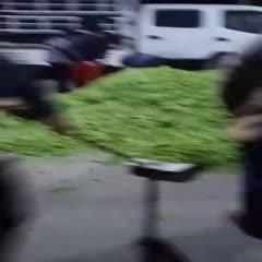 四川省攀枝花市仁和区中豌6号