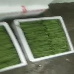四川省攀枝花市米易县无筋四季豆 30cm以上
