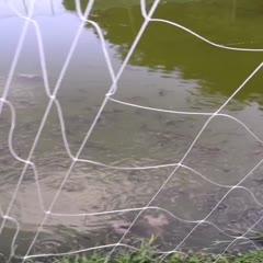 广西壮族自治区柳州市融水苗族自治县 大量泥鳅出售