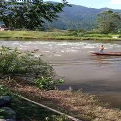 四川省达州市宣汉县 池塘草鱼