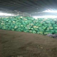 山东省青岛市平度市扁球甘蓝 600吨货需要的联系