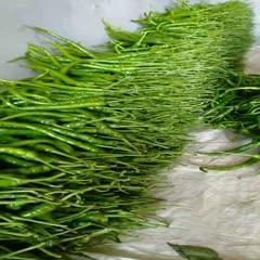 贵州省毕节市黔西县8号线椒 35公分以上八号线辣,卖相好 ,微辣,适应大众口味