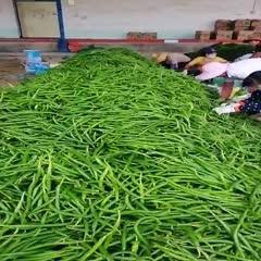 海南省澄迈县澄迈县 热带精品线椒,营养丰富。