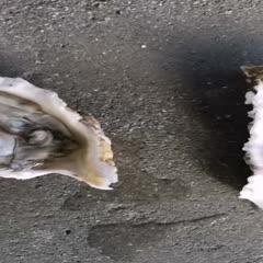 山东省威海市乳山市 乳山牡蛎1-2规格现开现蒸效果