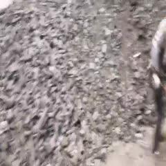 河南省濮阳市南乐县 供应各种木炭可开木炭专用发票