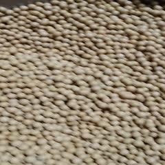 山东省临沂市兰陵县 690小金黄豆种子,专门做豆芽、豆苗的,出芽率高,质量杠杠的