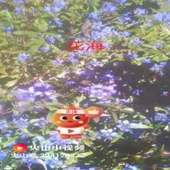 辽宁省抚顺市清原满族自治县 19新产龙胆草种,正宗北龙胆基地??衫纯疾觳喂?。