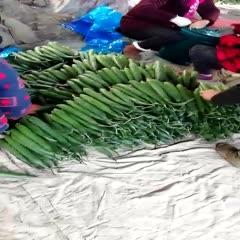 山東省臨沂市蘭陵縣 基地大棚黑條黃瓜大量上市,條行好,顏色好看。
