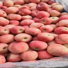 山東省煙臺市萊州市 紅富士蘋果85mm紙袋一級果,產地一手貨源大量批發