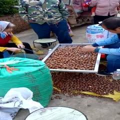 夏威夷果 夏威夷堅果澳洲堅果精選26CM特大果未開口自然風干原汁原味