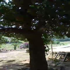 海南本地菠萝蜜