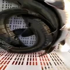 山东省济宁市任城区 鲟鱼,流水养殖,皮毛一流,10到200斤都有货