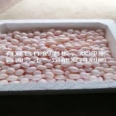 河南省洛陽市洛龍區 鴿子蛋專賣