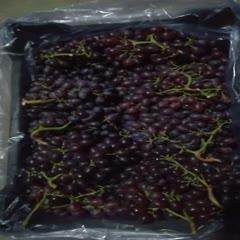 蓬莱市 无核红宝石脆甜葡萄