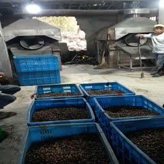 诸暨市香榧 绿色无污染食品品质保证