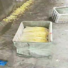 南通如皋市 精品韭黄大量上市  长期供应  有需要的联系我