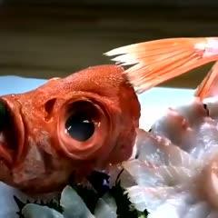 泉州石狮市真鲷 鲜活海捕海产 新鲜大眼鲷大目鱼大目莲