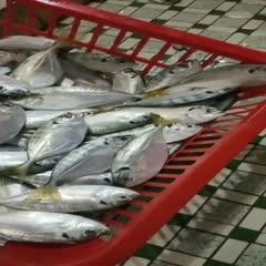 广东省汕尾市城区鮠鱼 西瓜皮煲汤首选。