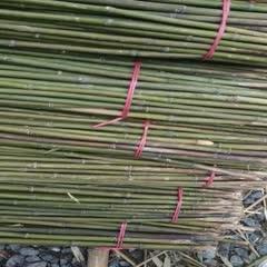 郴州桂陽縣 現貨特價 《2.5米菜架竹》蔬菜竹架/豆角竹架可改其他尺寸