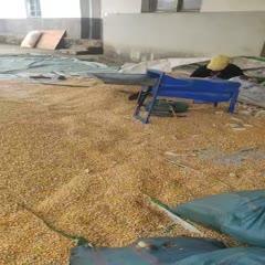 滄源佤族自治縣五谷聚衡玉米油 玉米太多了,一斤1.2有人要嗎?