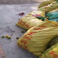 广东省广州市从化区 黄晶果种子