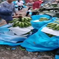 红河河口瑶族自治县河口香蕉 滑嫩香甜,唇留齿香,韵味悠长希望采纳!