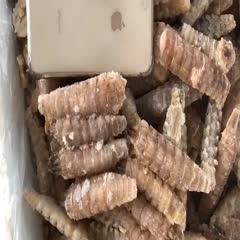 皮皮虾肉 冻单条无冰精品爬虾肉大肉
