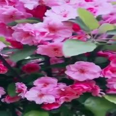 量大出售:造型海棠花瓶