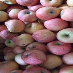 正宗山東棲霞蘋果