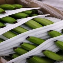 西双版纳景洪市 基地供应香蕉芭蕉