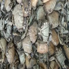 亳州红膏蟹 产地一手货源,价格优惠,欢迎订购