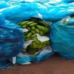 红河元阳县 云南香蕉,老挝香蕉,香蕉批发,整车批发