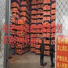 济宁鱼台县 洋葱,黄皮,红皮,二红,紫皮代收代存代发全国市场冷库出租
