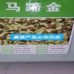 成都锦江区马蹄金种子 精选马蹄金铜钱草金钱草种子新货包邮