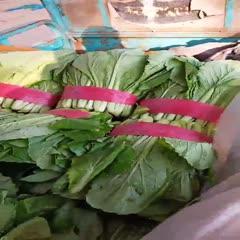 邯郸 河北邯郸长期大量供应小白菜,寻求长期供应合作。