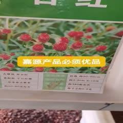 成都 千日红种子千日紫新种子包邮