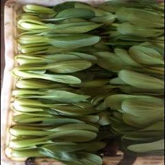 菏泽曹县 山东曹县蔬菜基地,精品油菜大量上市,全年有现货