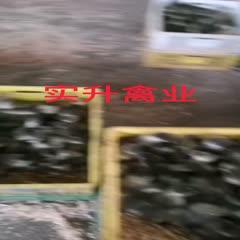 南宁西乡塘区 马岗鹅苗