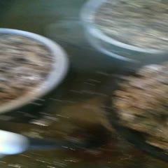 煙臺萊州市威海牡蠣 海水 1-2兩/只 鮮活水產
