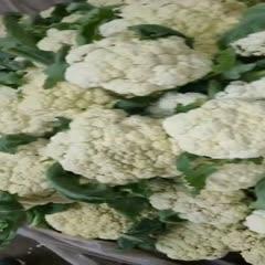 邓州市白花菜 花菜